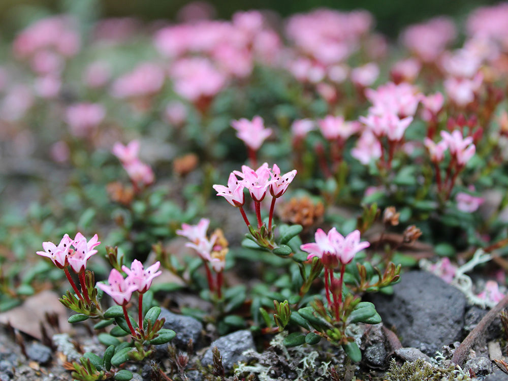 флора камчатки