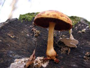 Лес осенний, лес грибной, ягодный, такой родной!!!. Ярмарка Мастеров - ручная работа, handmade.