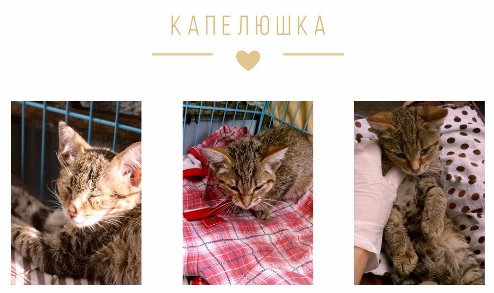 благотворительный, благотворительный сбор, помощь животным, помощь собаке, животные, никифор, поможем вместе, собака, котенок, помощь хвостикам
