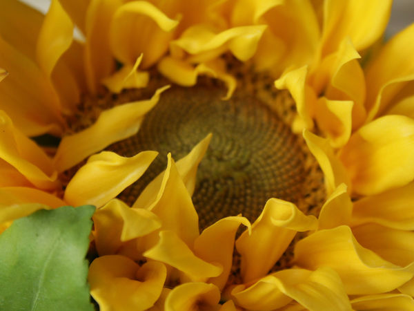 Много фото подсолнухов | Ярмарка Мастеров - ручная работа, handmade