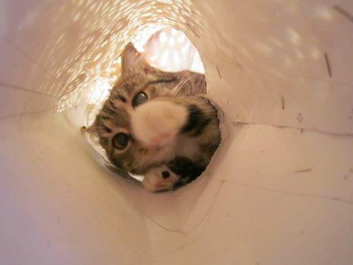 Ну как без кошек???, фото № 9