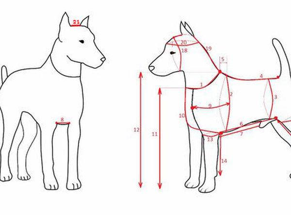 Как правильно снимать мерки для собак и кошек | Ярмарка Мастеров - ручная работа, handmade