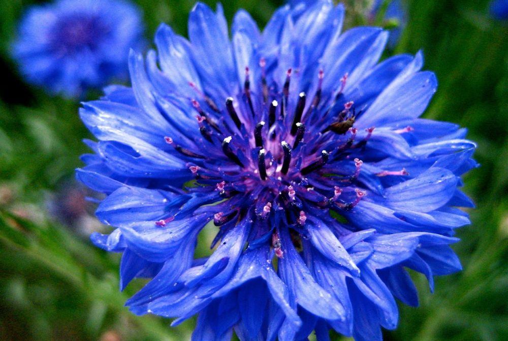 вдохновение синим