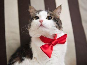День кошек! Скидка 30%!. Ярмарка Мастеров - ручная работа, handmade.