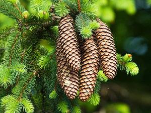 Елки-палки или магические свойства деревьев. | Ярмарка Мастеров - ручная работа, handmade