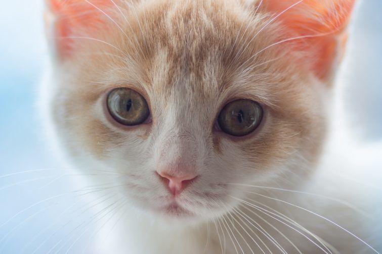 фотограф котов