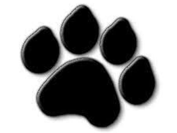 Не Пропустите Blackfriday with Blackcat!!!уже завтра!!! | Ярмарка Мастеров - ручная работа, handmade