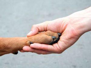 Животным из приюта нужна помощь!!! | Ярмарка Мастеров - ручная работа, handmade