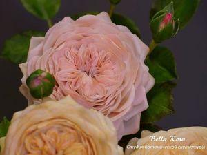 Роза Остина из полимерной глины. Ярмарка Мастеров - ручная работа, handmade.