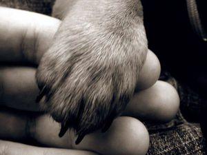 12 благотворительный аукцион в поддержку бездомных животных | Ярмарка Мастеров - ручная работа, handmade