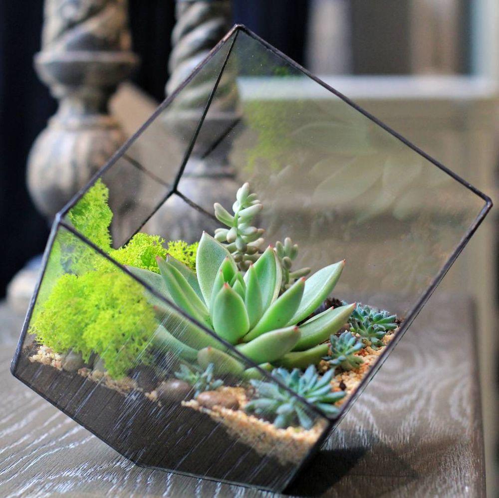 домик для кактуса