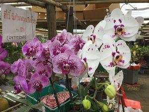 Северный Таиланд. Орхидеи и другая экзотика.   Ярмарка Мастеров - ручная работа, handmade