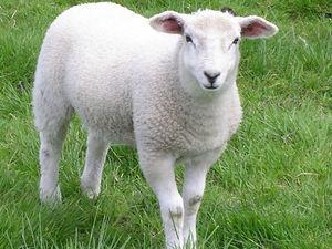 Как ухаживать за вашей собственной овечкой, или Стирка валяных вещей   Ярмарка Мастеров - ручная работа, handmade