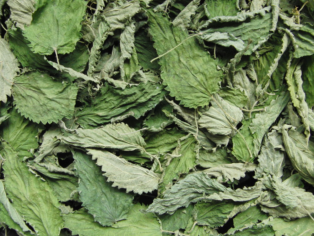 травы ручного сбора, крапива двудомная