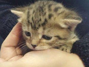 Поможем найти дом трем котятам! Нужны перепосты! | Ярмарка Мастеров - ручная работа, handmade