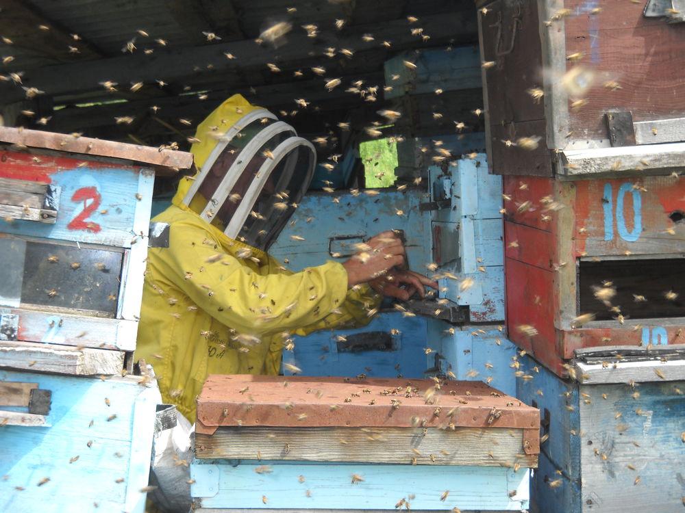 пчелиный дом