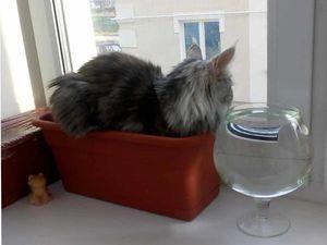 Лежанка для кошки. Ярмарка Мастеров - ручная работа, handmade.