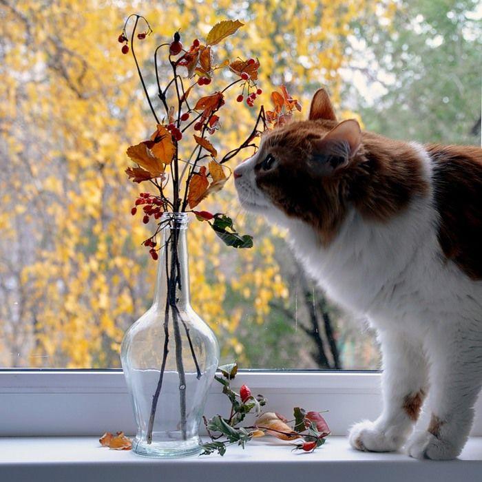Юбилеем маме, открытка настроение осень
