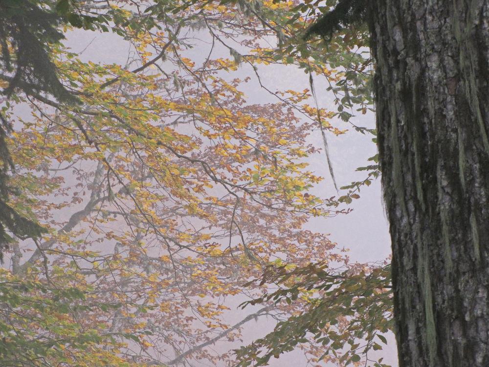 В погоню за летом или бархатный сезон (часть 3), фото № 7