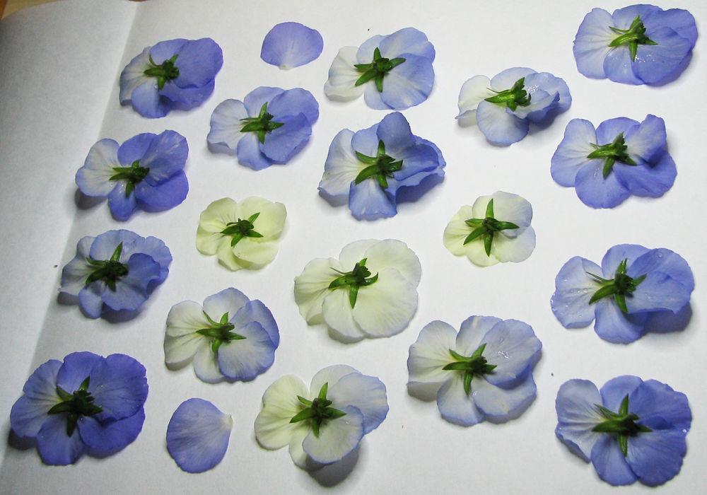 собранный гербарий