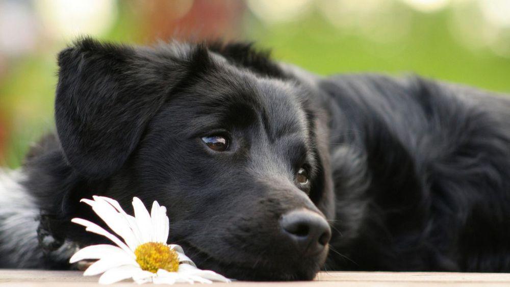 аукцион, помощь, помощь животным, благотворительность