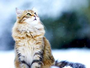 А у нас снег пошел!!!. Ярмарка Мастеров - ручная работа, handmade.