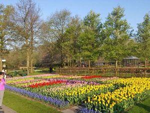 Парк тюльпанов в Голландии. Ярмарка Мастеров - ручная работа, handmade.