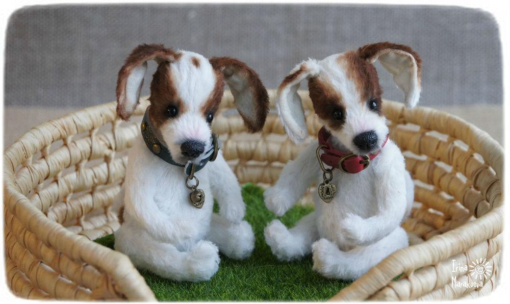 щенок, щенки