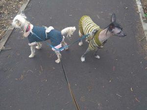 Зачем Собаке Одежда. Ярмарка Мастеров - ручная работа, handmade.