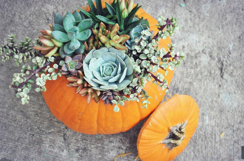 You'll Refuse to Carve Scary Pumpkins Seeing These Gorgeous Ideas with Succulents, фото № 3