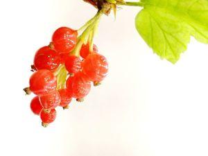 НОВИНКИ!!! новые ягодные брошки!. Ярмарка Мастеров - ручная работа, handmade.