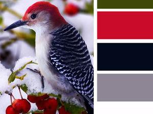 Очаровательные и яркие птичьи цветовые палитры | Ярмарка Мастеров - ручная работа, handmade