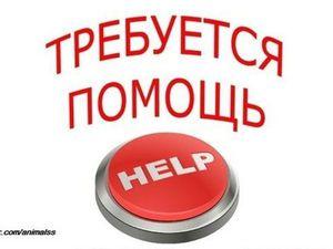 Нужна ваша помощь ! Всем кто неравнодушен ! | Ярмарка Мастеров - ручная работа, handmade