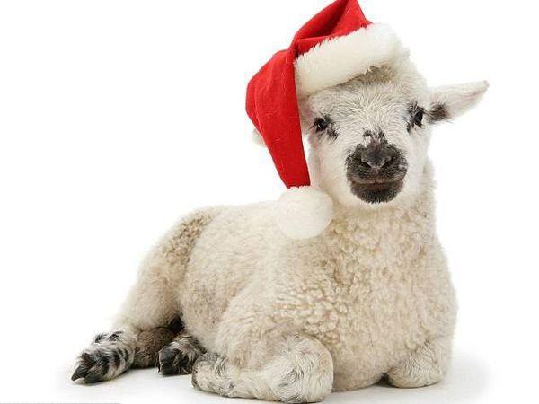 Пред-Рождественские скидки на флис | Ярмарка Мастеров - ручная работа, handmade
