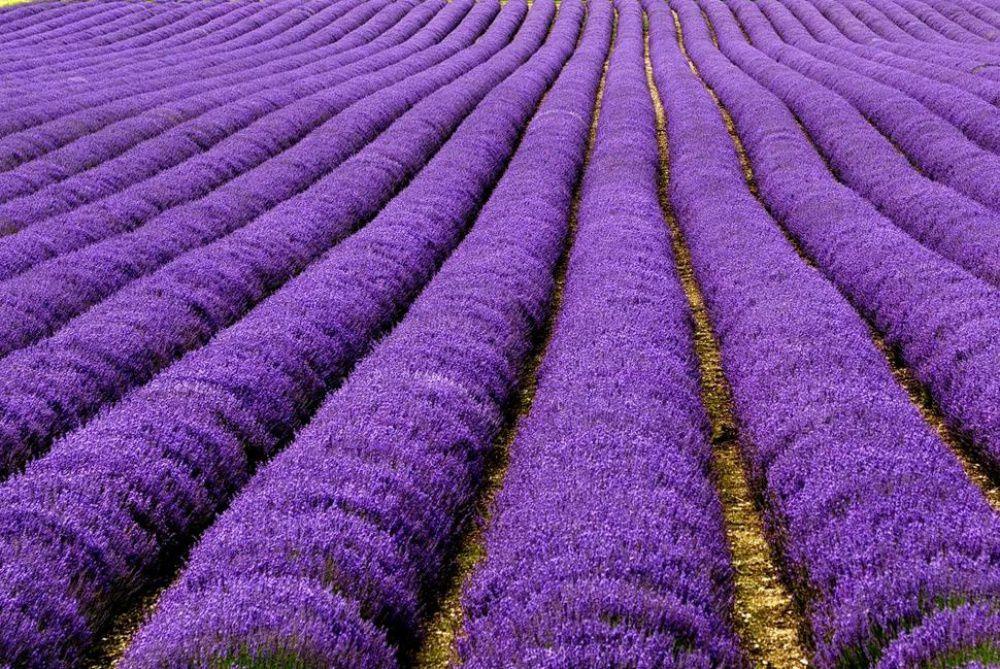 Краски природы: 49 впечатляющих фотографий, фото № 23