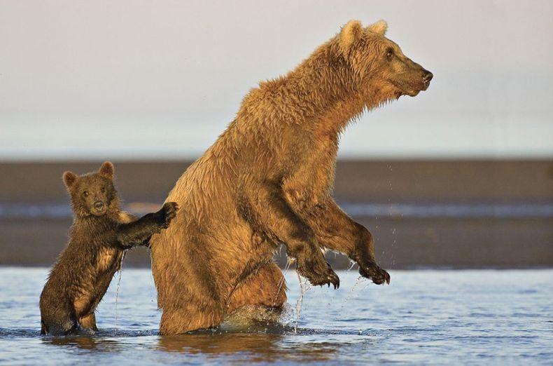 мишка, медведь