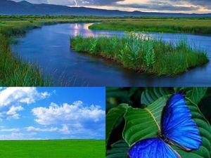Удивительная комбинация синего и зеленого цветов. Ярмарка Мастеров - ручная работа, handmade.