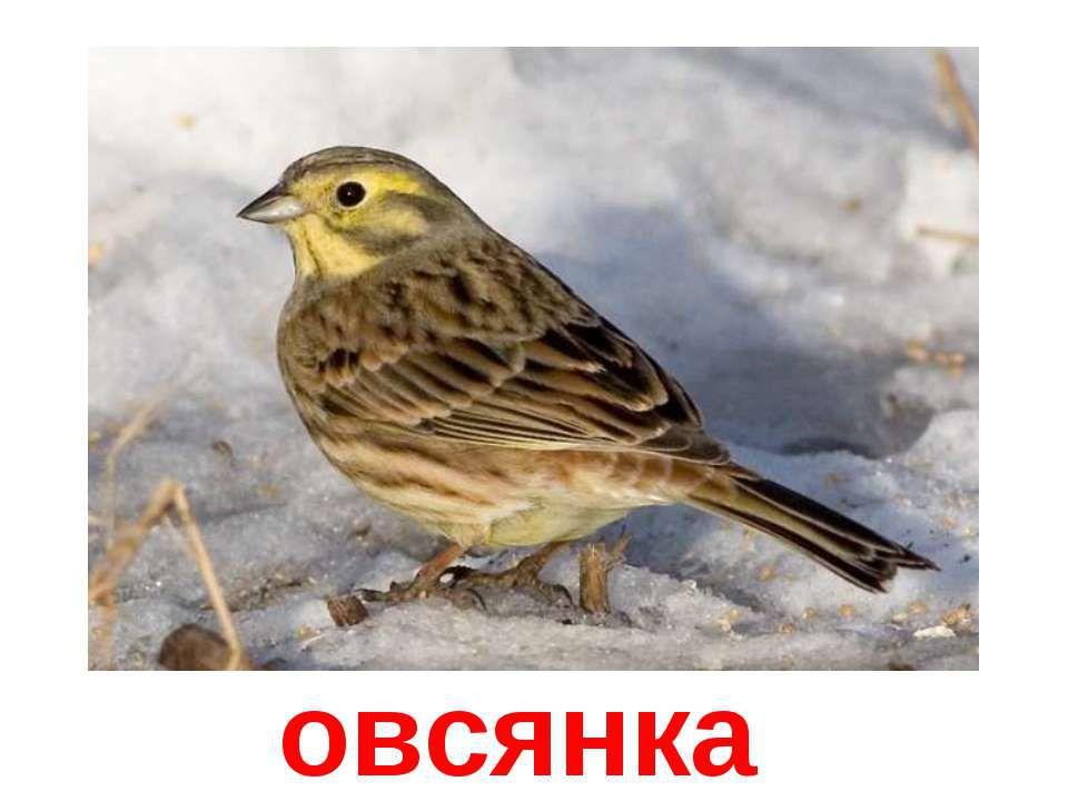 идеи птичьей кормушки