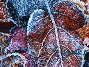 Шаль с бисером Заледеневшие листья. Итоговый результат.))) | Ярмарка Мастеров - ручная работа, handmade