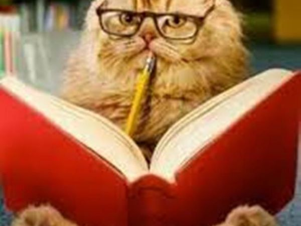 Мурка-загадка: Умны ли кошки?   Ярмарка Мастеров - ручная работа, handmade