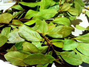 Денежные ритуалы с листьями Лавра. Ярмарка Мастеров - ручная работа, handmade.