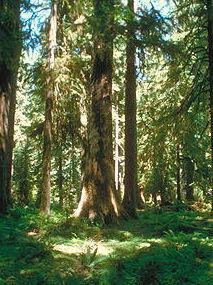амарант, интересно, дерево, украшения из дерева