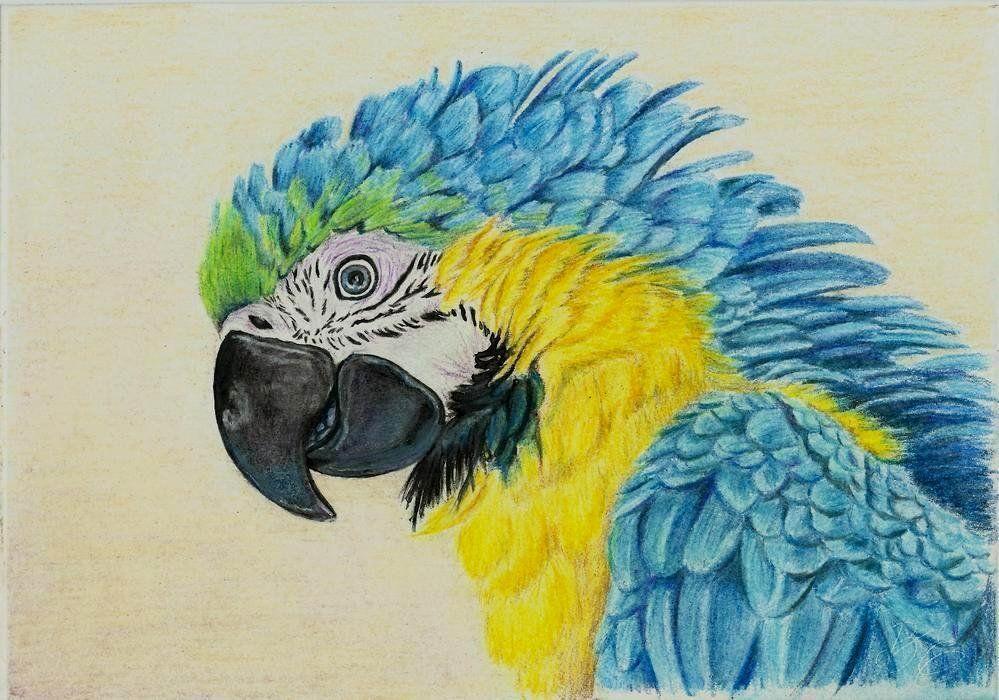 Цветные карандаши как инструмент высокого искусства. Особенности работы с художественными карандашами
