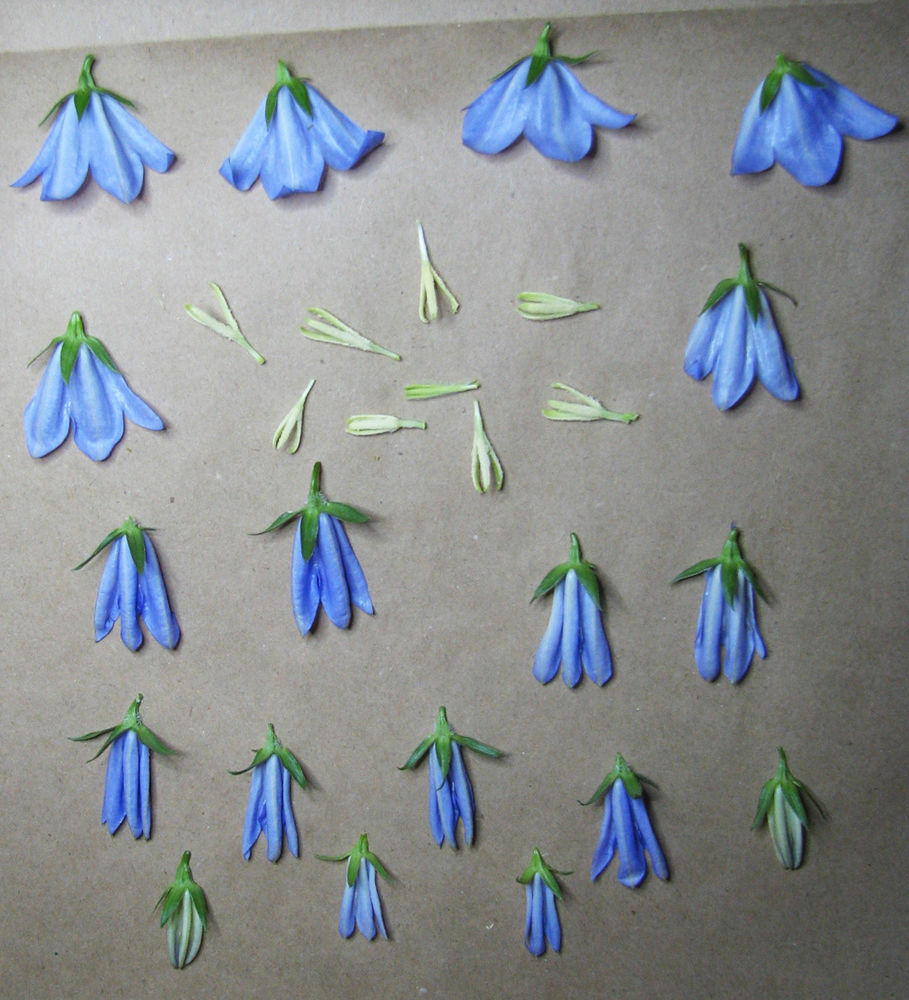 как делать гербарий
