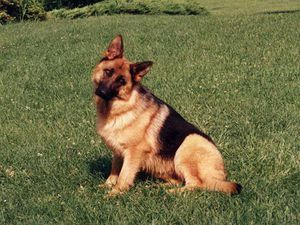 Помогите собачушке!  Благотворительный аукцион | Ярмарка Мастеров - ручная работа, handmade