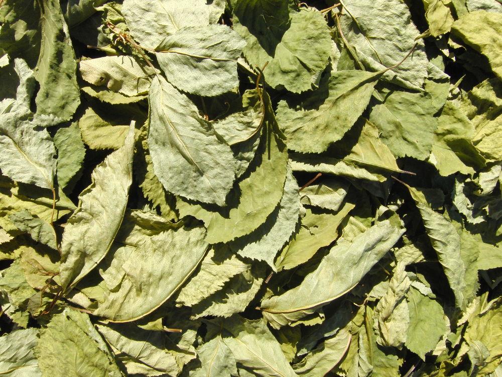дикие травы, лекарственные травы
