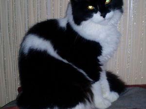 Кошки - Самые Мистические Существа ! | Ярмарка Мастеров - ручная работа, handmade