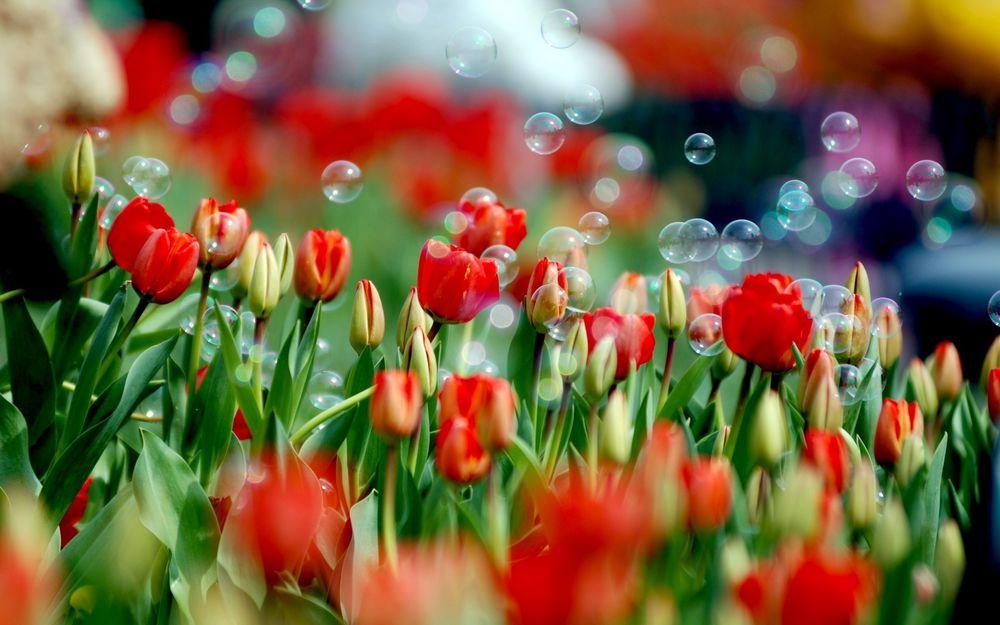 Что говорят цветы.....!!!!, фото № 12