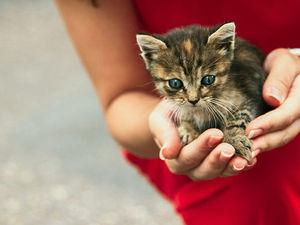 поможем вылечить котенка. Ярмарка Мастеров - ручная работа, handmade.