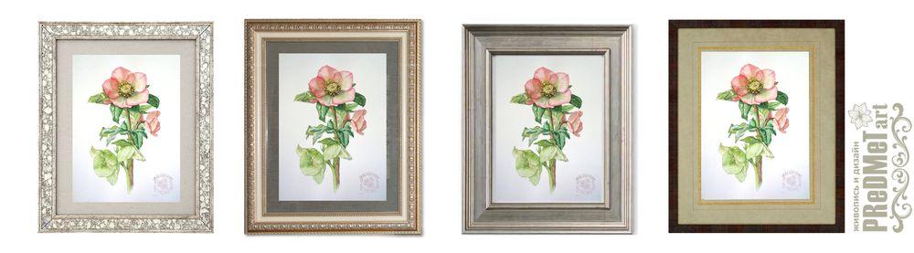 ботаническая живопись, цветы акварелью, картина с цветами, оформление интерьера, морозник, геллеборус, весенние цветы
